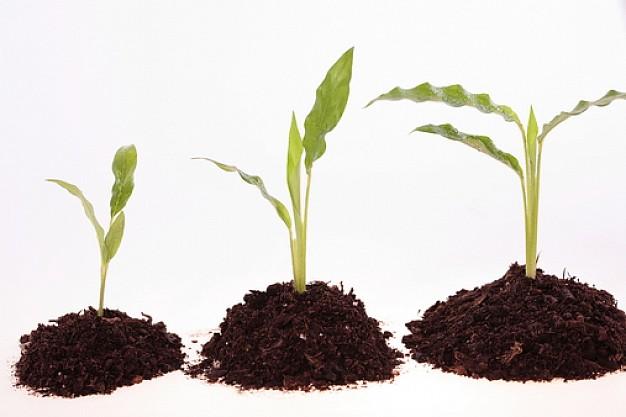 tekstury--tekstury--rozwoj-roślin--białe-tło_3142931
