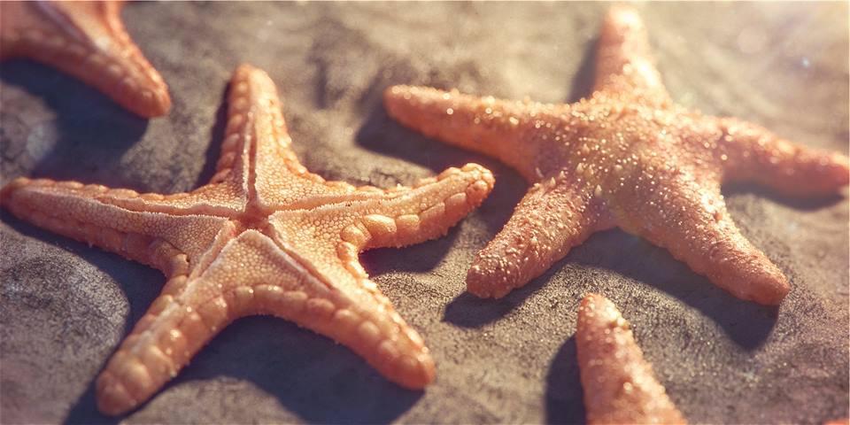 Making-of-Starfish